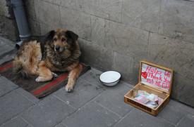 Begging Dog Lviv
