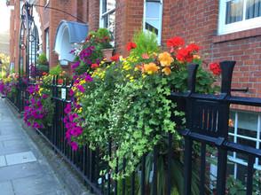 London Blooms