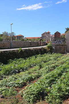 Fields in Town, Stari Grad