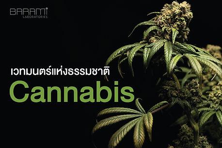 cannadis-01.jpg