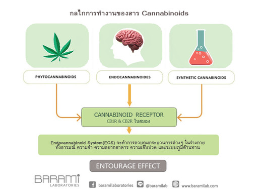 Cannabinoids - กลไกการทำงานที่ยังเป็นปริศนา!