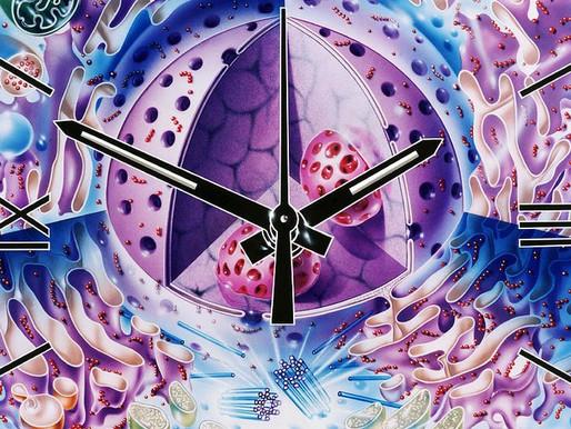 กลไกของความชรา – 4 : Cellular Clock
