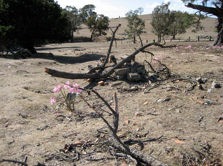 5.local farm,belladinna.lilies,drought 2