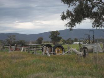 tractor & pyrenees_0446.JPG