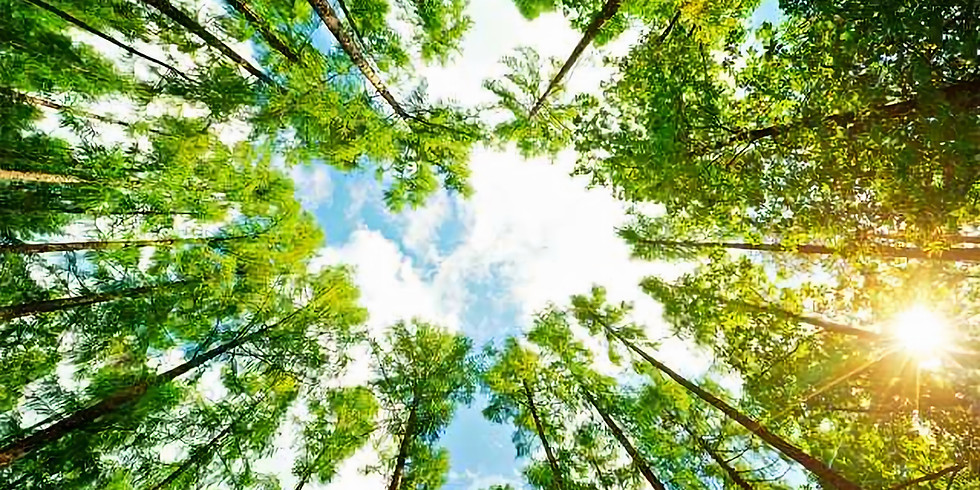 National Arbor Day (1)