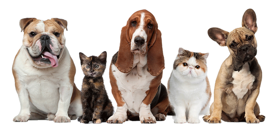 kisspng-pet-sitting-dog-cat-beechwood-ve