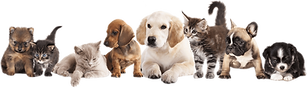 kisspng-puppy-pet-sitting-dog-kitten-pet