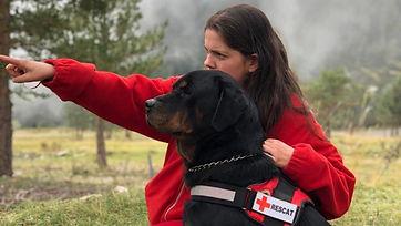 cruz roja perros.jpg