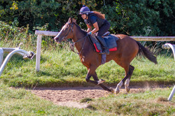 Pink Flamingo on the gallops 2