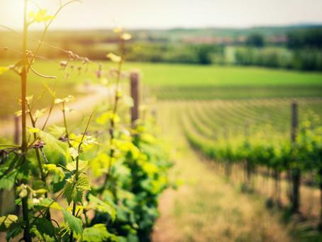 Déjanos ayudarte a agilizar la gestión de tu viñedo
