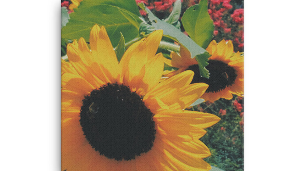 Beetiful Sunflower