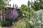 High Desert Gardens of Old Bisbee