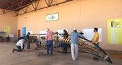 AZPM: Minke whale skeleton comes to Bisbee