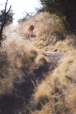 Bisbee Trails