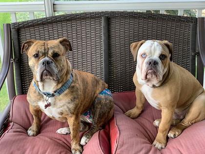 Millie and Kodiak