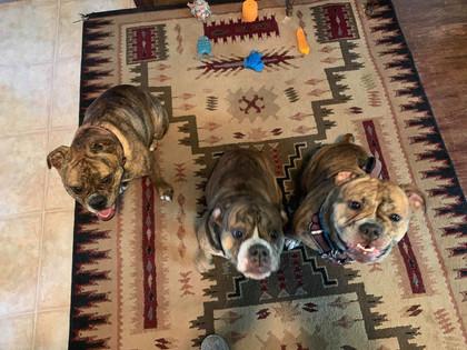Kai, Mack, and Millie