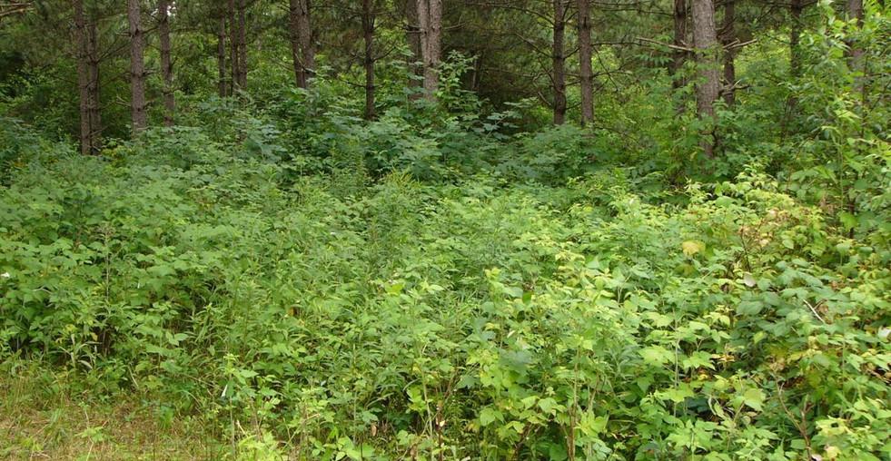 beforegrazingwoods.jpg