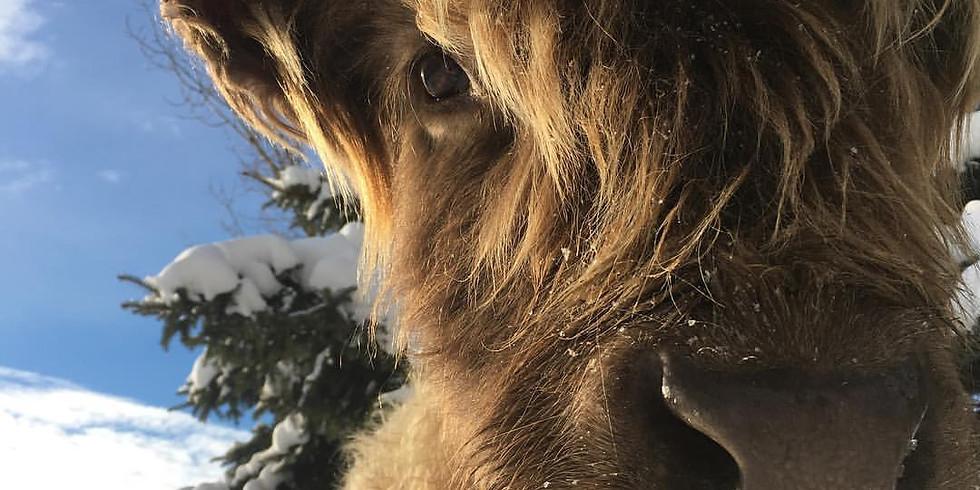 Celebrate Winter at Blue Ox