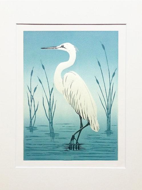 Shelagh Dwyer: Little Egret