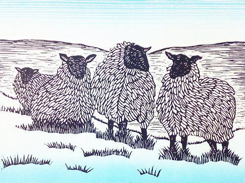 Shelagh Dwyer: Wild Fleece