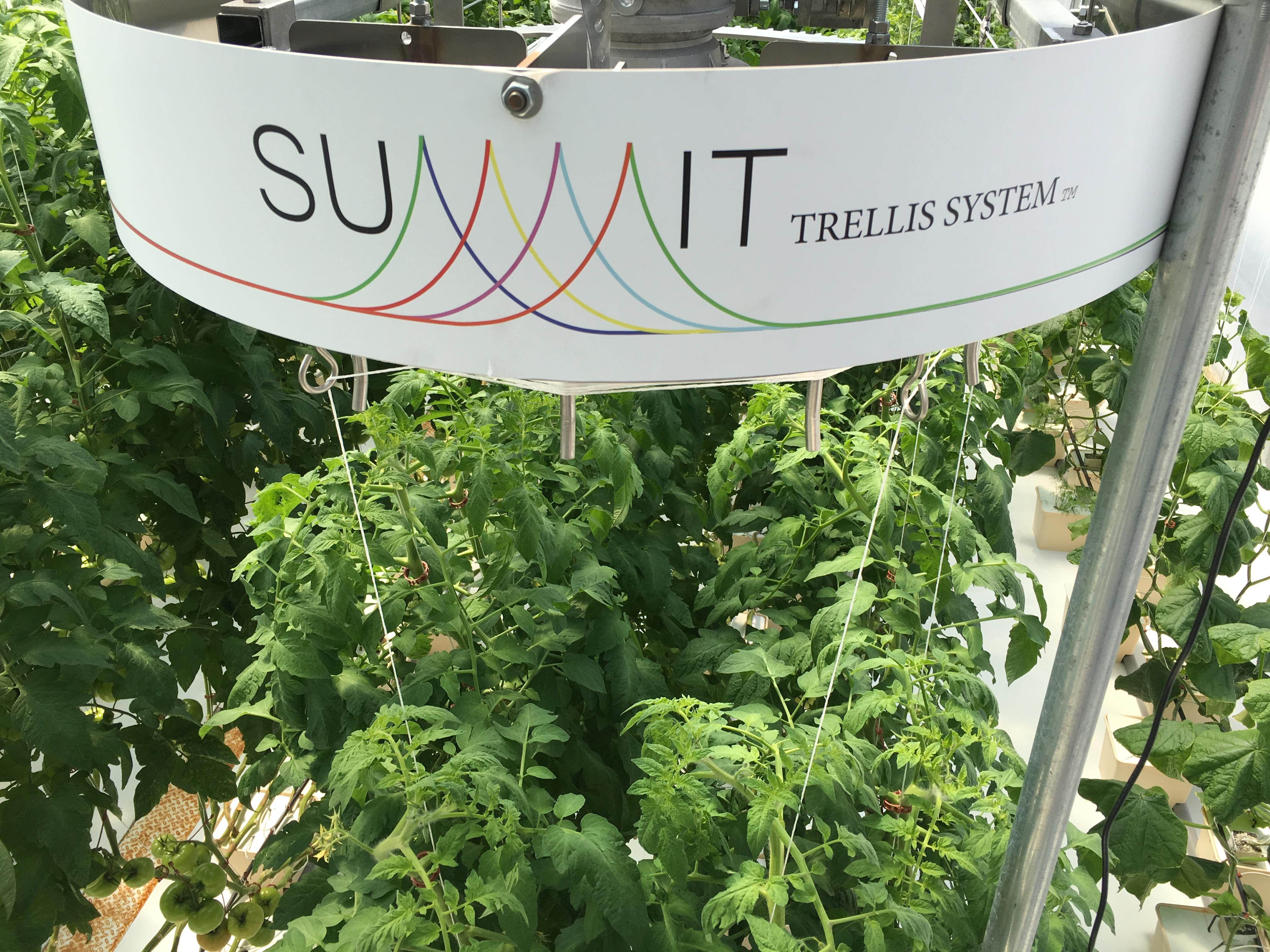 Still Water Designs Summit Trellis 1
