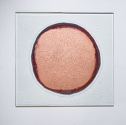 Copper and circle I