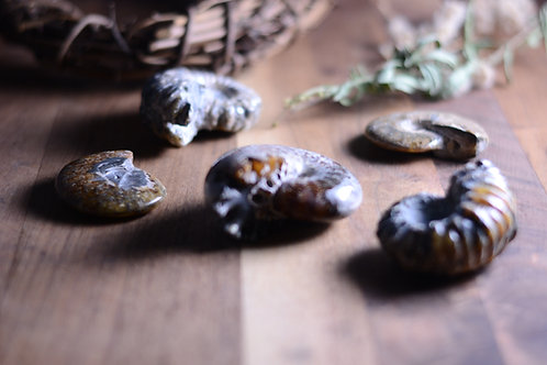 Ammonite Fossil Gemstone