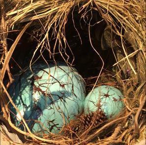 Homebound Nest