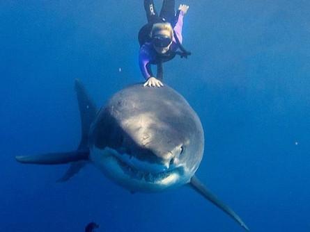 The Gentleness of Sharks