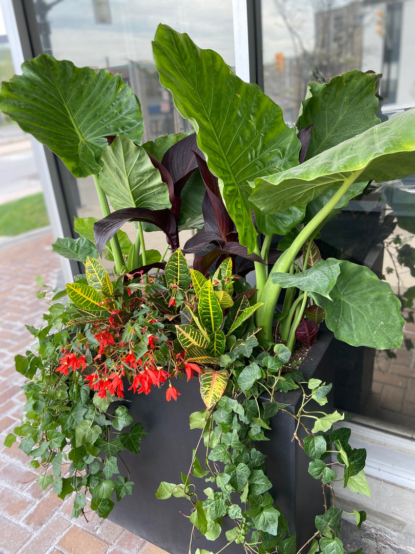 Art in Bloem - Seasonal Planters Barrie Collingwood Muskoka Blue Mountain