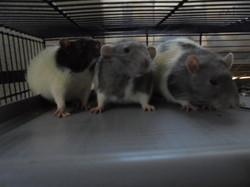 Minus, Olaf et Cortex