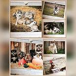 Welpenkalender
