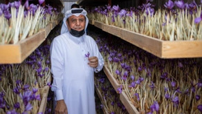 "For the first time in Qatar, the cultivation of ""Red Gold"" ... a successful quality experience"