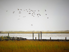 Fort Fisher NC Basin