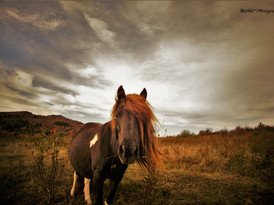 Grayson Highlands Ponies #10