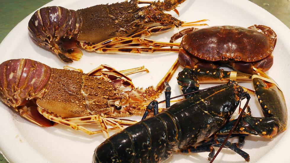 crustacés Astoux et Brun.jpg