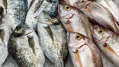 Astoux et Brun poissons sauvages.jpg
