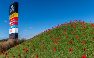 TX Poppy Flowers-1.jpg