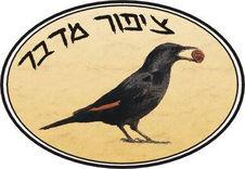 הוסטל ציפור מדבר
