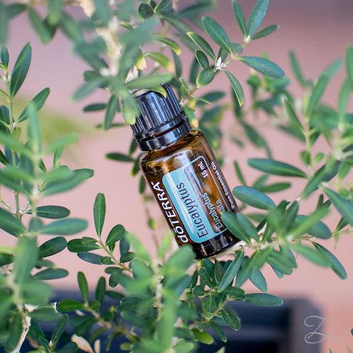 Eucalyptus Pure Essentail Oil