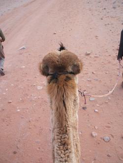 Wadi Rum b Camel Head on