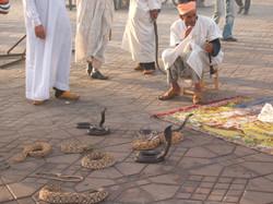 Djeema el Fna  - snake charmers