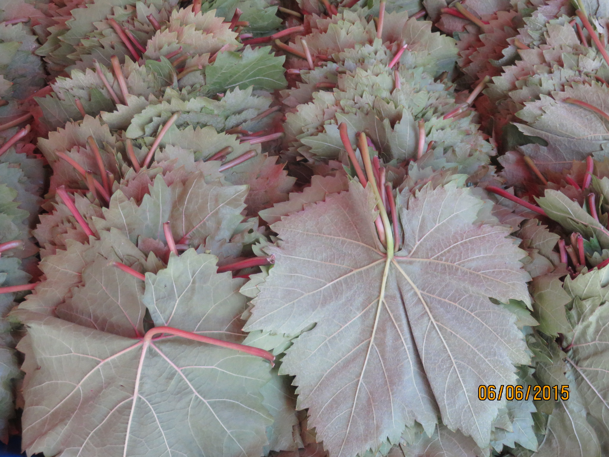 fresh vine leaves