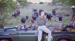 Jeep stuck amongst water buffallo