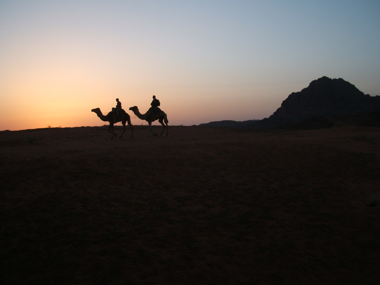 Wadi Rum Bedouin Camp - Camels in the sunset