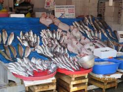 Fresh Fresh fish