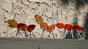 Glass Ants