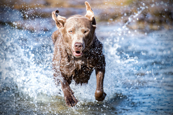 7 Ways to Keep Your Pet Safe In the Summer Months