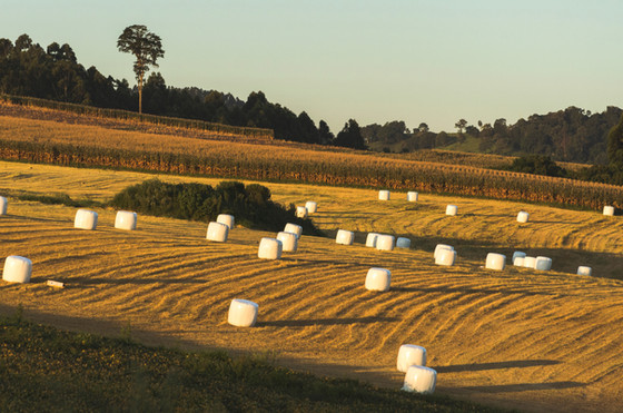 What are those Marshmallows In the Fields? - Why Wrapped Bales?