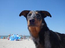 Miss Daenerys à la plage